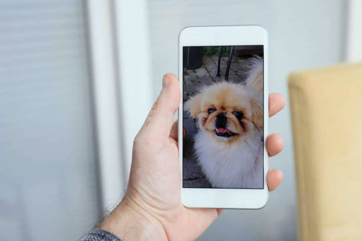 man in quarantine has a video call with his dog